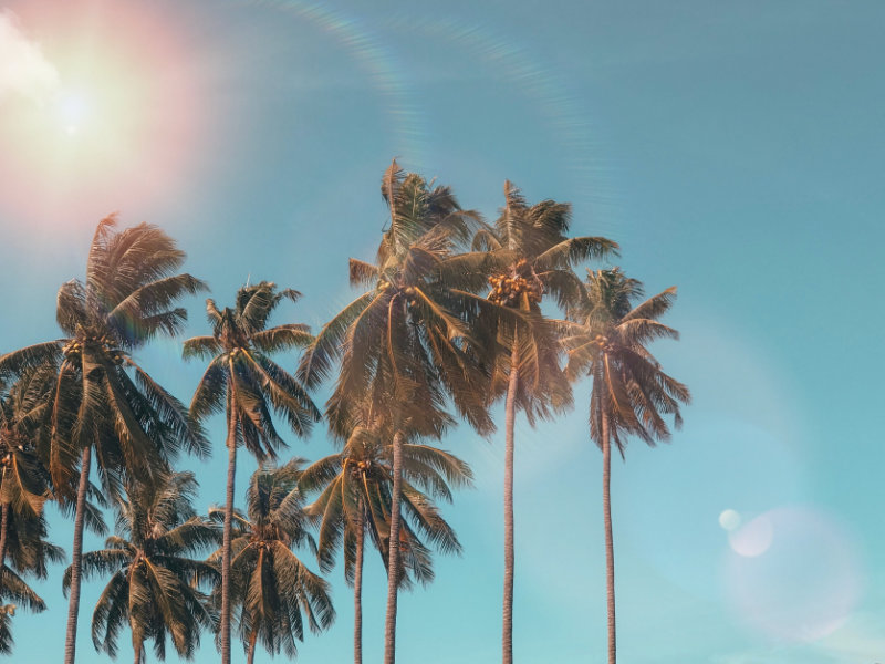 Kokospalmen mit blauem Himmel und Sonnenschein